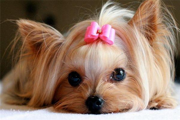 Сексуальная сучка стала в позу собаки