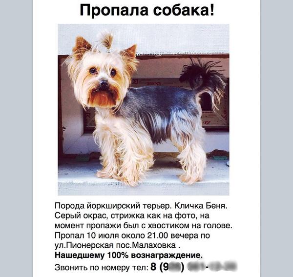 Разместить объявление пропаже собаки на заказ работы задачи по стаховые услуги