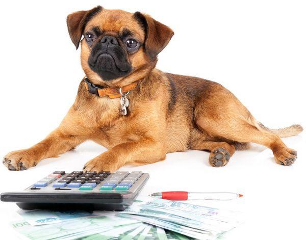 С чего начать разведение собак? Краткий ликбез для желающих стать заводчиками - Клуб любителей маленьких собак