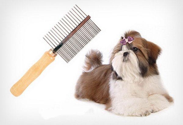 Содержание ши тцу в квартире - Клуб любителей маленьких собак