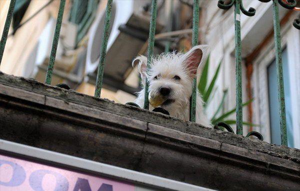 Собака в коммунальной квартире тольятти закон о содержании