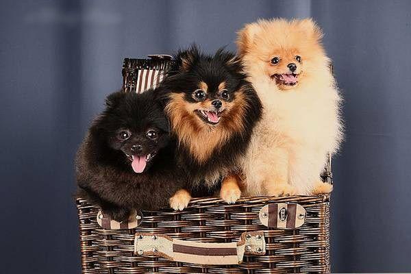 Маленькие собаки в нашей жизни