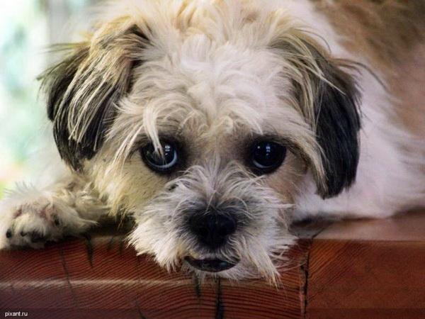 почему у собаки пахнет из пасти рыбой