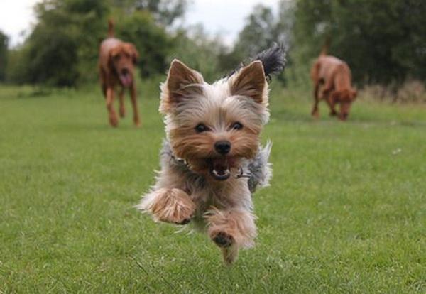 Спеціально підібраний здоровий раціон для котів і собак