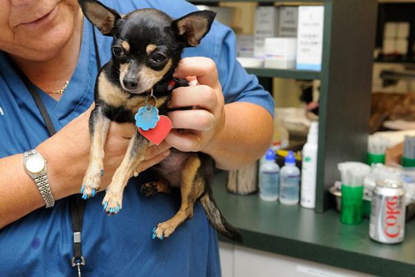 Как распознать чумку у собаки симптомы и лечение