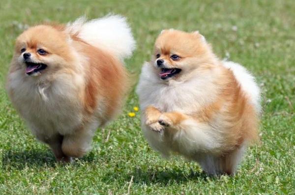 Уход и содержание - Клуб любителей маленьких собак
