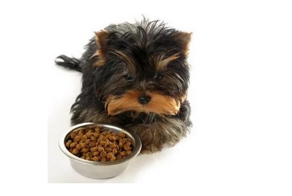 Собачья жизнь может показаться кому-то скучной и однообразной