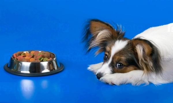 Когда и как часто можно менять корм? Клуб любителей маленьких собак