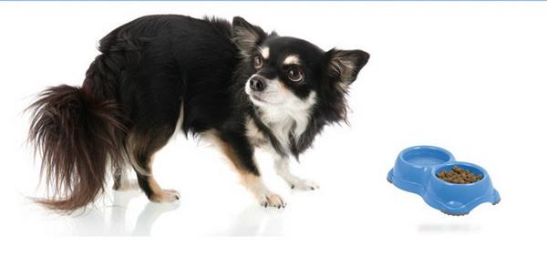Моя собака ничего не ест! » - Клуб любителей маленьких собак