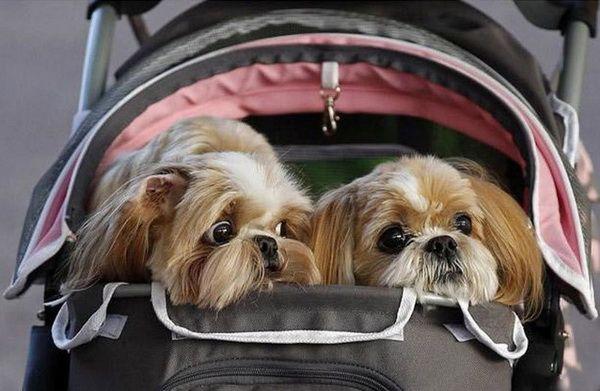 Вывоз собаки за границу